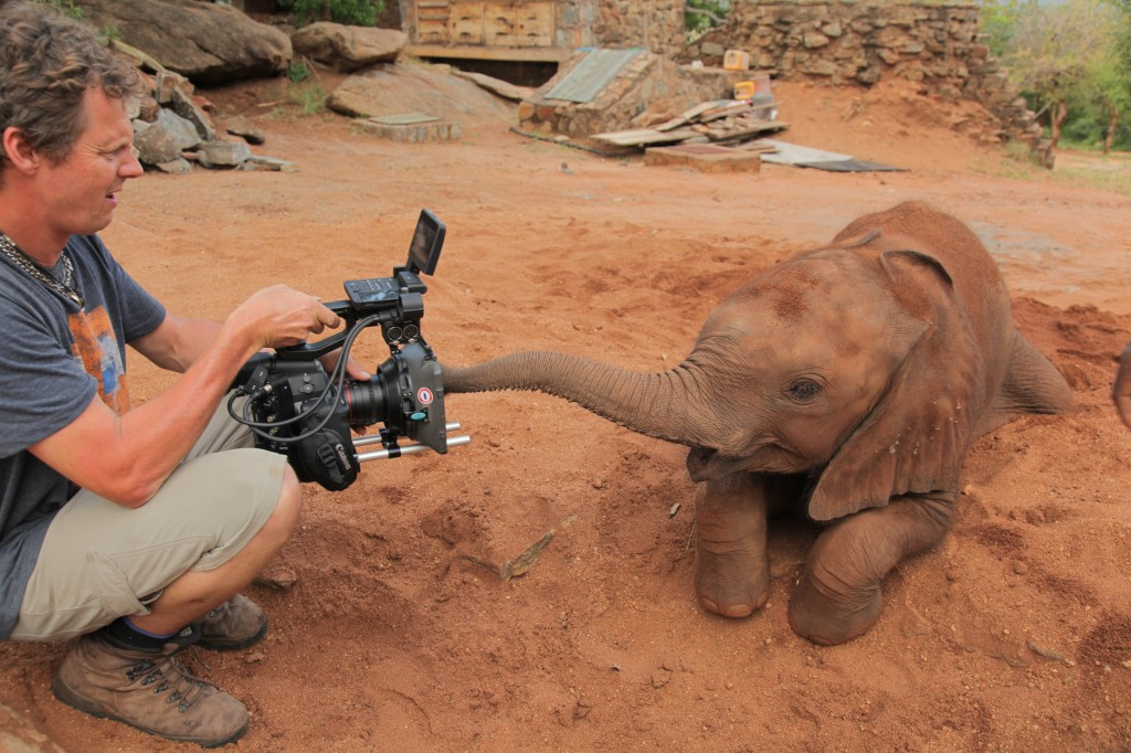 Filming an orphaned baby elephant, Tanzia